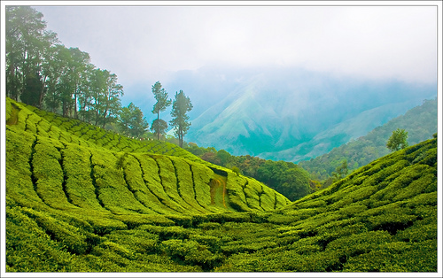Top Station, Munnar Kerala. Photo by kcbimal