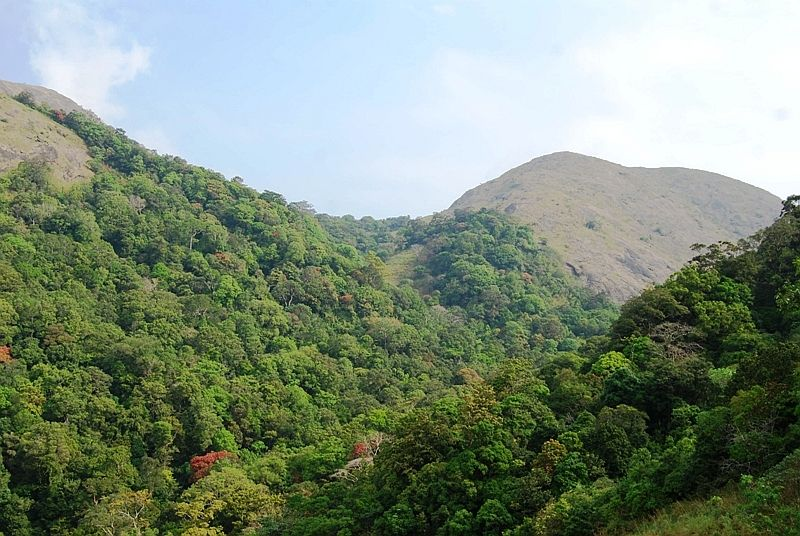Nelliampathy Mountains. Photo by Kjrajesh